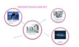 emperor penguin food chain. Fine Emperor Untitled Prezi Inside Emperor Penguin Food Chain E