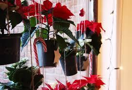 Diy Weihnachtliche Blumenampeln Mit Mini Weihnachtsstern