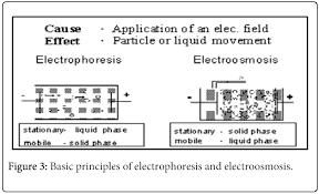 zetasizer technique in biochemistry omics international biochemistry analytical biochemistry electrophoresis