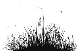 tall grass silhouette. Exellent Tall Silhouette Of Tall Grass And Bugs On White Vector Art Illustration To Tall Grass