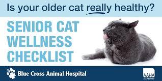 Senior Cat Wellness Checklist Blue Cross Animal Hospital Toronto