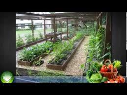 container garden vegetables. Container Garden Vegetables For Beginners - Vegetable Gardening In Containers