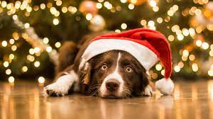 You can experience the version. Christmas Pets Wallpapers Top Free Christmas Pets Backgrounds Wallpaperaccess