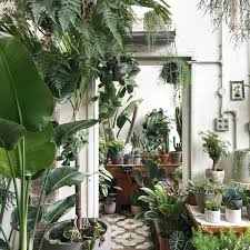 Selection of plants from the Conservatory Archives shop on Hackney Road