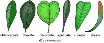 Leaf Terminology Part 2