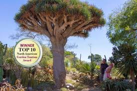 sd botanic garden tree 800 x 533