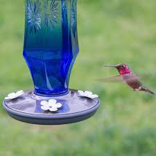 full image for superb blue glass hummingbird feeder 12 cobalt blue glass hummingbird feeder glass hummingbird