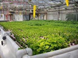 aquaponic gardening. image from wikimedia aquaponic gardening -
