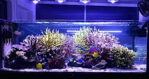 r aquarium lights reef aquarium led light marine aquarium lights how long r aquarium lights reef aquarium led