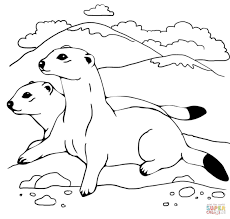 Weasel Mustela Coloring Pages Free Coloring Pages