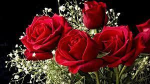 Beautiful Roses wallpapers - HD ...