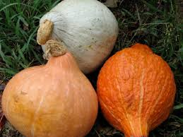 Gourd Identification Chart How To Identify Squash Different Squash Types You Didnt