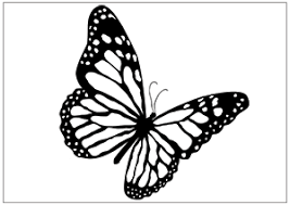 Outline Of Butterfly Free Download Best Outline Of Butterfly On
