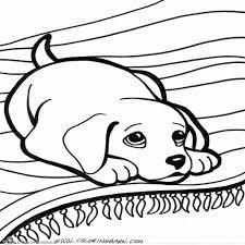 Happy Lily Cute Dogs Pinterest Idee Maltezer Hond Tekening20