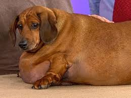 Image result for Making my Dog Fat
