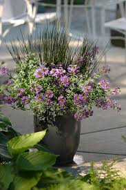 Proven Winners - High & Mighty combination container recipe containing  Diamond Frost - Euphorbia hybrid, Whirlwind Blue - Fan Flower - Scaevola  hybrid, Q.