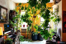 best indoor plants for office. Cool Office Plants. Model Summer Rayne Oakes Plant Filled Apartments Apartment Best Indoor Plants For