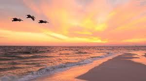Beach Majestic Beach Resort Resort Collection