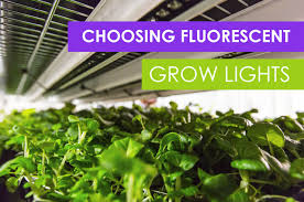 Fluorescent Grow Lights How To Choose Fluorescent Grow Lights For Your Farm