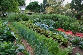 Kitchen Garden Blog Large Vegetable Garden Notes From Northern Gardenernotes From