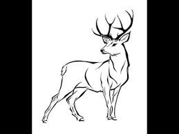 How To Draw White Tailed Deer Full Body Drawing In Steps Youtube