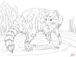 Small Picture Raccoon Looking Back coloring page Free Printable Coloring Pages