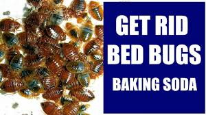 How To Get Rid of Bed Bugs With Baking Soda Completely and ...
