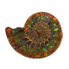 Ammonite Fossil Inlaid with Ammolite ...