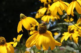 10 terrific flowers for honey bees