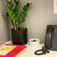 Cubicle for office Old The Best Lowlight Plants For Office Cubicles According To Experts Ros Office Furniture The Best Plants For Cubicles According To Plant Experts