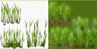 tall grass texture. Drawn Grass Texture Tall