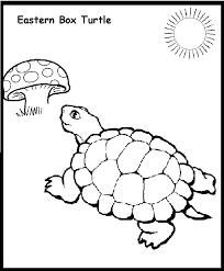 Small Picture Turtle Coloring Pages Kids Coloring Home