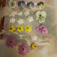 Wax Paper Flower Pressed Flowers Floral Doily