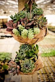 Decorating: Beautiful Succulents Hanging Garden - Succulents Plants