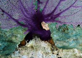 best marine life of n republic images  an underwater photo essay diving puerto plata n republic