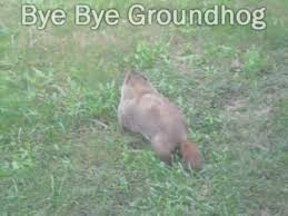 how to keep groundhogs out of my garden. Groundhog Inside The Garden - Upgrading Fence Ground Hog In How To Keep Groundhogs Out Of My