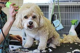 cut dog hair with human clippers