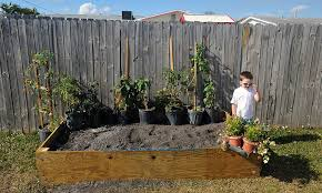 malcolm surveys what will soon become our raised backyard vegetable garden