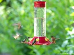 charming ant traps for hummingbird feeder feeders vintage glass bottle humming red antique more birds perky