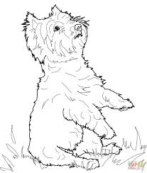 How long has it been since i did a lesson on an actual dog breed that was very. Yorkie Coloring Page Coloring Home