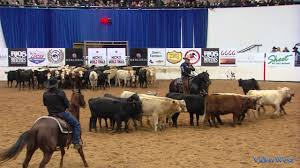 2016 Mercuria NCHA World Finals Champions NRR Cat King Cole and Tracy Barton  - YouTube
