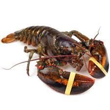 Live Lobsters For Sale - Maine Lobster ...