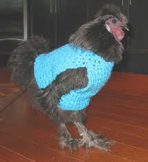 Chicken Sweater Pattern Magnificent Does Your Chicken Need A Sweater MNN Mother Nature Network