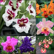 photo essay hawaiian grown orchids greener on the inside