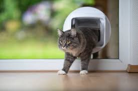 cat flap installers in southampton