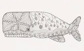 Small Picture DIANES CORNER Intl Whale Shark Day August 30 2016