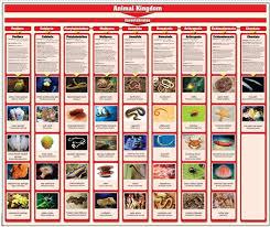 Animal Classification Chart Invertebrates Montessori Materials Animalia Kingdom Charts With Cards