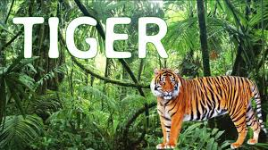 real jungle animals. Brilliant Jungle Learn Real Jungle Animal Sounds With Surprise Time Sound  Effects And Animals YouTube