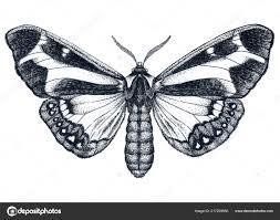 Krásný Motýl Tetování Dotwork Tattoo Dysschema Howardi Tradiční