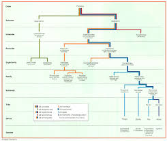 Biological Classification Chart Primate Taxonomic Classification This Abbreviated Taxonomy